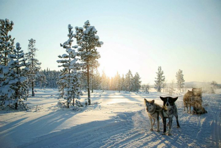 Best Finland Holidays