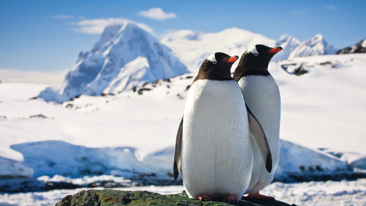 Antarctica Holidays – Affordable Group Holidays to the South Pole